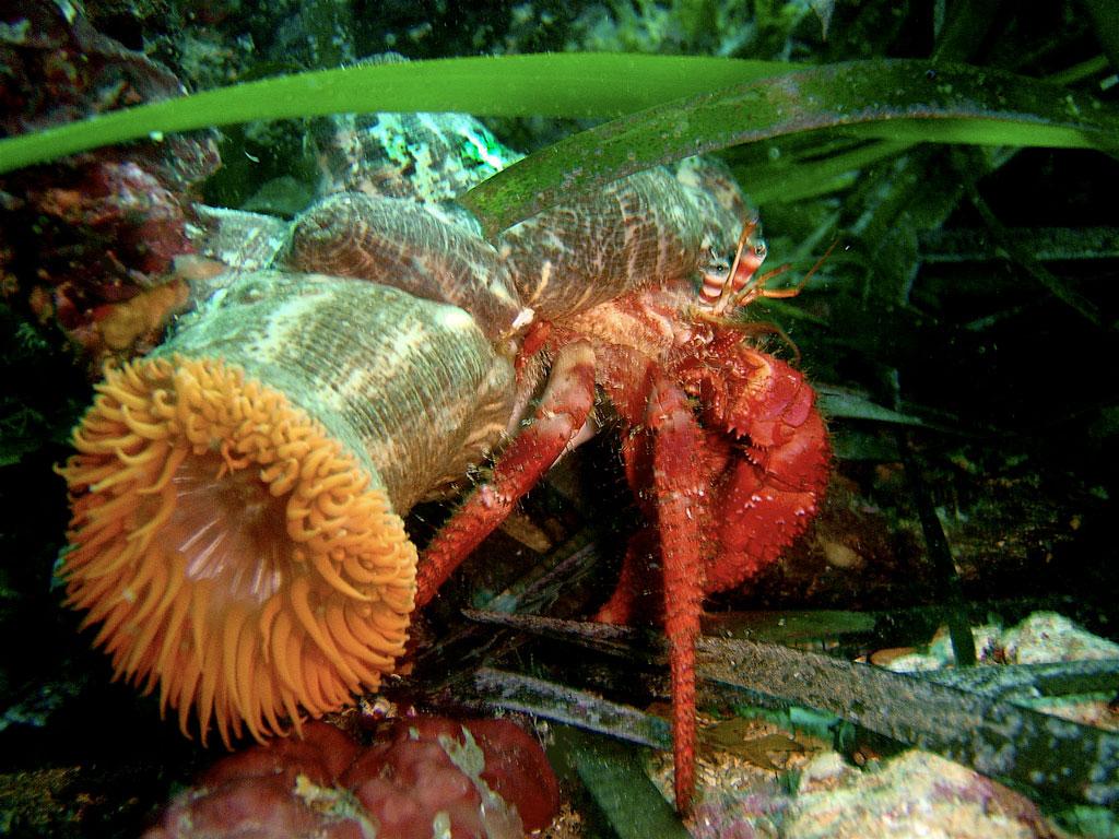 Aquarium-of-Rhodes